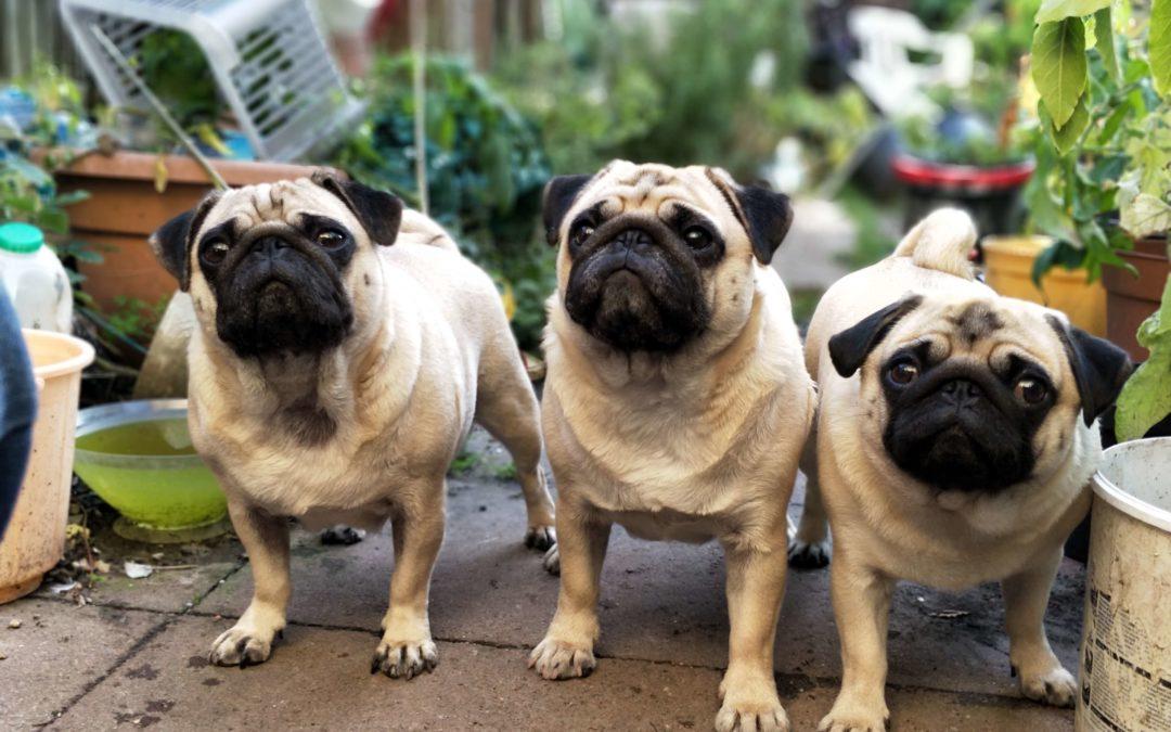 Digital MYM image chiens, un article de blog